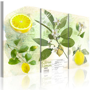 Wandbild - Fruit: lemon