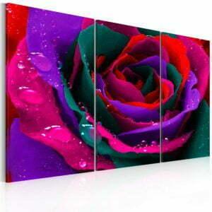 Wandbild - Regenbogenfarbene Rose