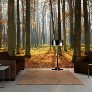 Fototapete - Autumn trees