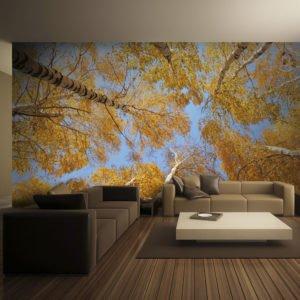Fototapete - Autumnal treetops