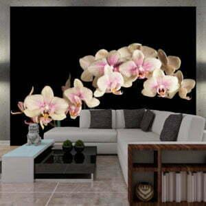 Fototapete - Blühende Orchideen auf dunklem Hintergrund