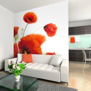 Fototapete - Poppies on the wihite background