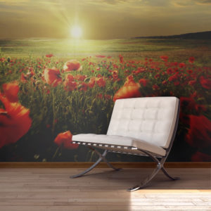 Fototapete - Morning on the poppy meadow