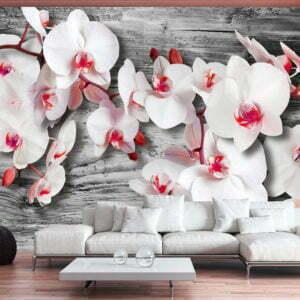 Fototapete - Callous orchids