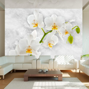 Fototapete - Lyrical orchid - White