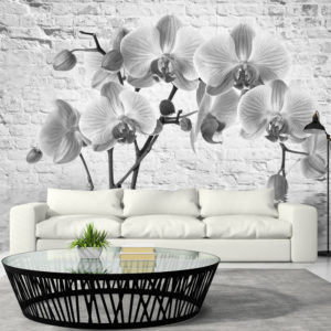 Fototapete - Orchid in Shades of Gray