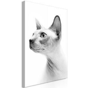 Wandbild - Hairless Cat (1 Part) Vertical